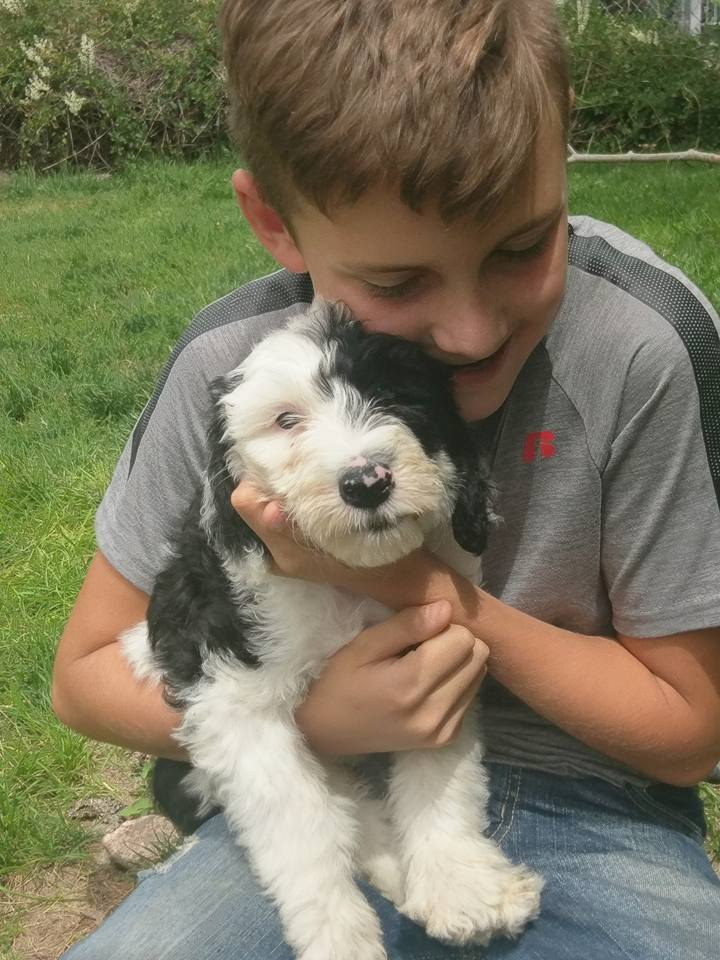 Dogs and Puppies for Sale Eckert, Colorado | Open Range Pups